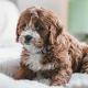 Cachorro-Ciumento