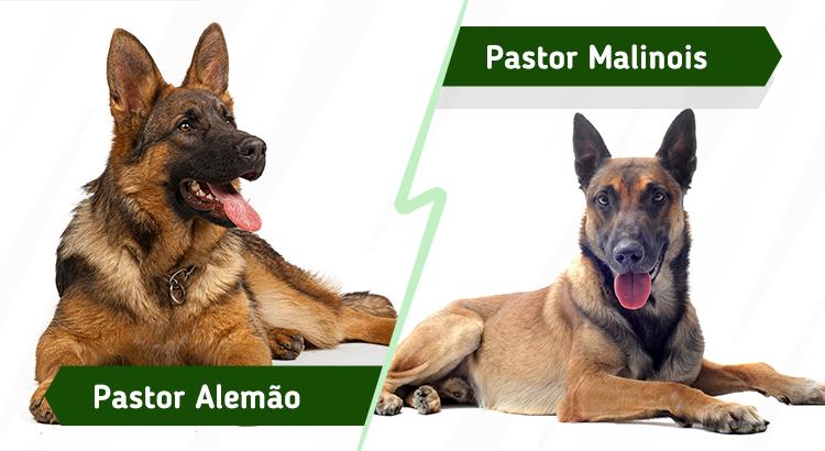 cachorros parecidos