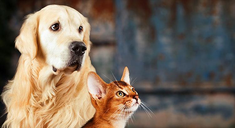 alimentos tóxicos para cães e gatos