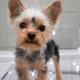 cuidados com cães de porte mini