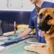cães também podem doar sangue