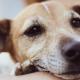 Pets idosos: aprenda a identificar os sinais das principais doenças