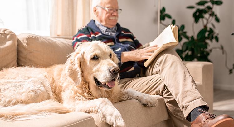 Pets e idosos: conheça os benefícios dessa relação
