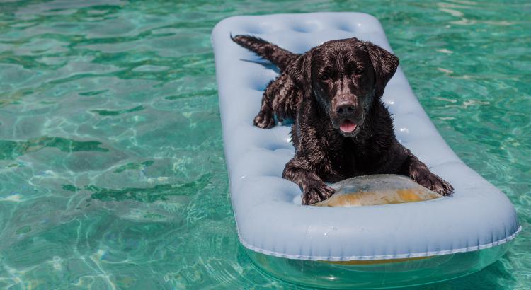 Cuidados com cachorro na piscina