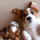 Fases da vida do cachorro! Em qual seu pet está?