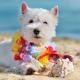 Câncer de pele em cães: o que você precisa saber