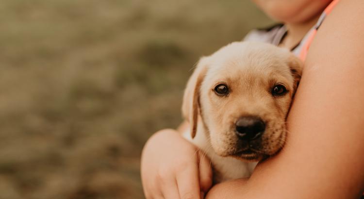 Dicas para cuidar de um filhote de cachorro
