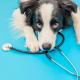 Giardíase canina: tudo sobre a doença
