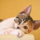 Esporotricose: conheça essa doença comum em gatos