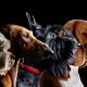 O que é o pedigree de um cachorro?