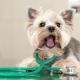 Pós-operatório da castração: dicas para cuidar do seu pet