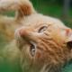 5 motivos para castrar seu gato