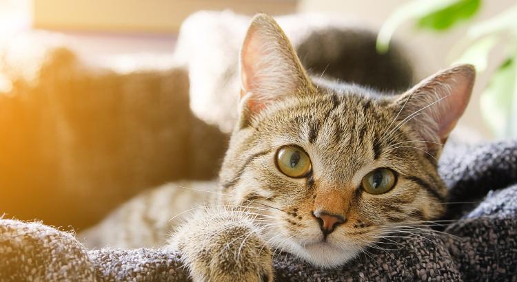 Leishmaniose felina: tudo sobre essa doença