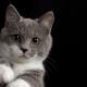 Leptospirose em gatos: proteja seu pet dessa doença