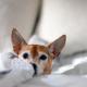 Alzheimer canino: tudo sobre a doença que atinge cães idosos