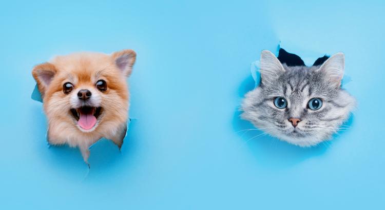 Cachorro ou gato? Descubra qual pet mais combina com você!