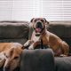 Enriquecimento ambiental para cães - Confira dicas e ideias