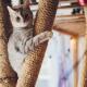 Enriquecimento ambiental para gatos: confira dicas e ideias