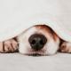 Saiba mais sobre a gripe canina