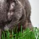 """Você já ouviu falar em catnip? Conheça a """"erva do gato"""""""