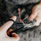 5 dicas para te ajudar na hora de cortar a unha do gato