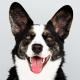 Otite Canina: Conheça a doença e os cuidados para evitar a inflamação
