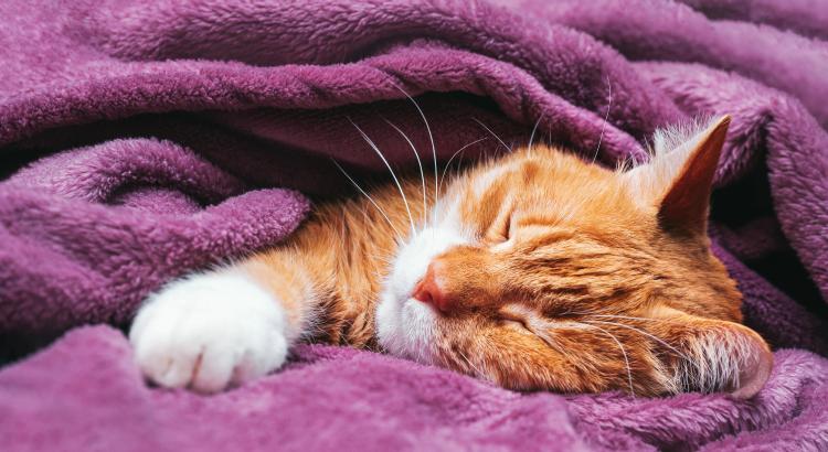 5 dicas para cuidar de um gato positivo para FIV e/ou FELV!