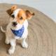 Cinomose canina: entenda tudo sobre essa doença que pode ser mortal